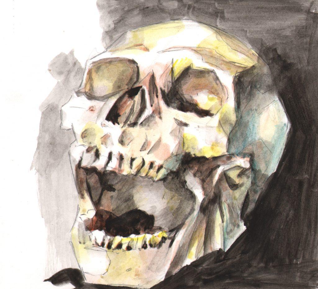skull-24